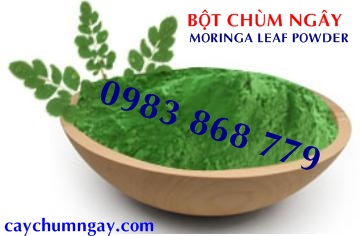 Benefits You Can Get From Moringa oleifera Leaf Powder